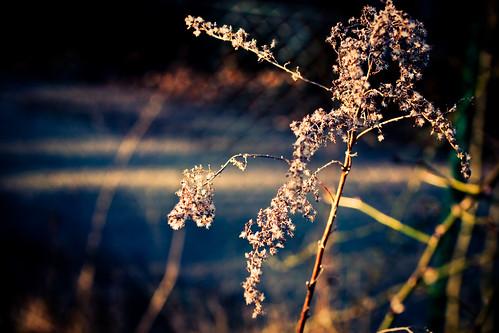 morning sunlight plant lund flower public sunshine skåne europa europe sweden bokeh skandinavien blomma sverige scandinavia morgen scania zonlicht bloem zweden morgon växt skane fav10 zonneschijn solsken solljus vosplusbellesphotos yearbook2009 skånelän