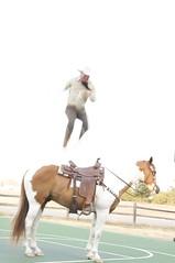 animal sports(1.0), western riding(1.0), stallion(1.0), equestrian sport(1.0), sports(1.0), equestrian vaulting(1.0), horse harness(1.0),