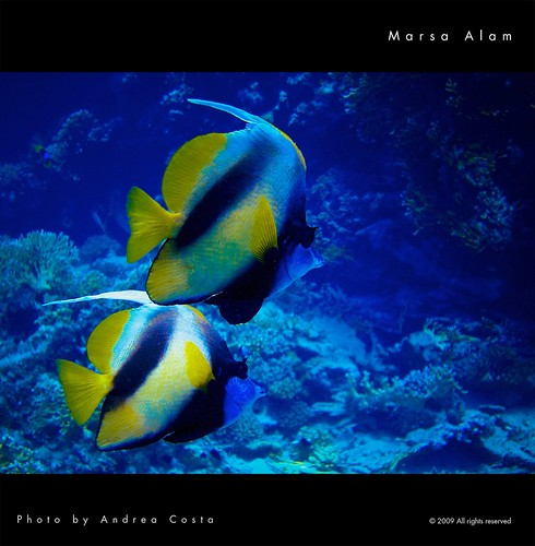 Marsa Alam underwater close up | by Andrea Costa Creative