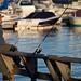 Fishing in the marina by vanYperen.com