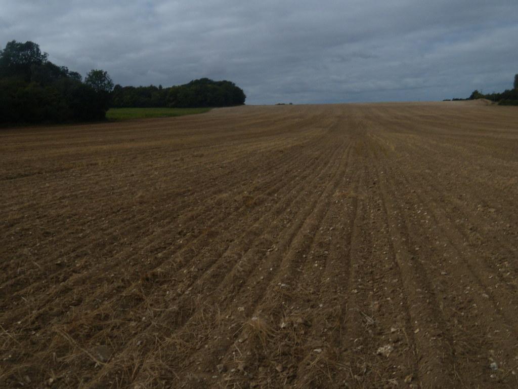 Big field Wye Circular