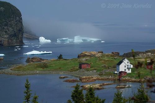 Pure Newfoundland