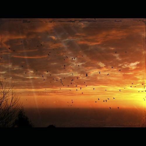 sky birds clouds sunrise dawn magicunicornverybest magicunicornmasterpiece thankyoujoessistahforthetexture