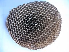 mesh(0.0), invertebrate(0.0), insect(0.0), design(0.0), circle(0.0), honeycomb(1.0),