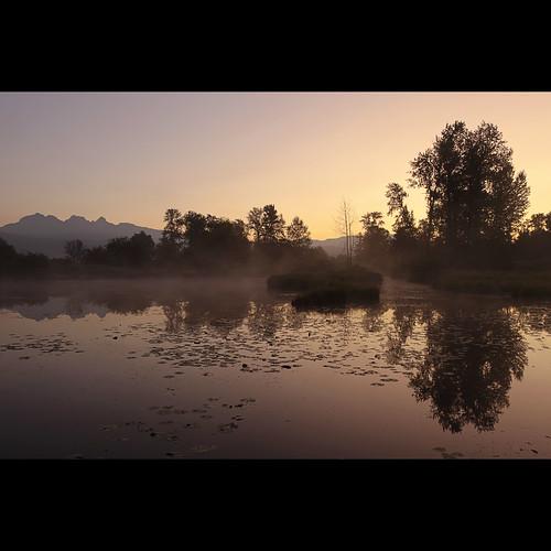 morning trees mist reflection landscape dawn pond september lilypads mapleridge morningmist goldenears jerrysulinapark alouetteriver canonef1740mmf40lusm kvdl