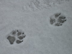footprint, winter, white, snow, ice, winter storm, freezing,