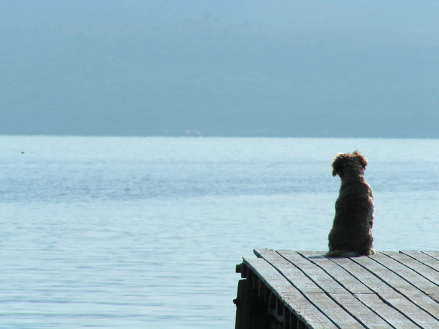dog looking out to sea greece explore tristanfs photos