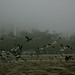Small photo of A Flock Of Seagulls