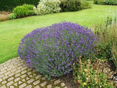 Propiedades repelentes e insecticidas de ciertas plantas - Plantas ahuyenta insectos ...