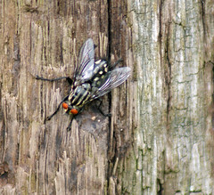 wasp(0.0), cicada(0.0), true bugs(0.0), animal(1.0), fly(1.0), wing(1.0), invertebrate(1.0), macro photography(1.0), fauna(1.0), close-up(1.0), wildlife(1.0),