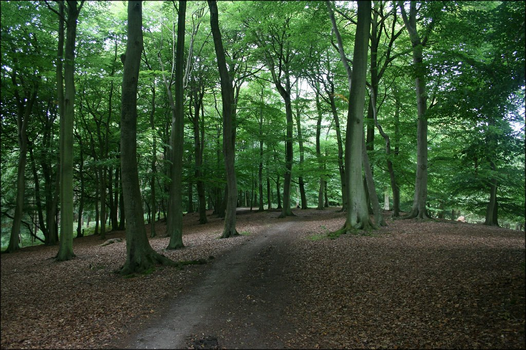 Great Wood, Hambleden