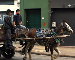 vehicle, pack animal, coachman, horse, horse harness, horse and buggy, carriage,
