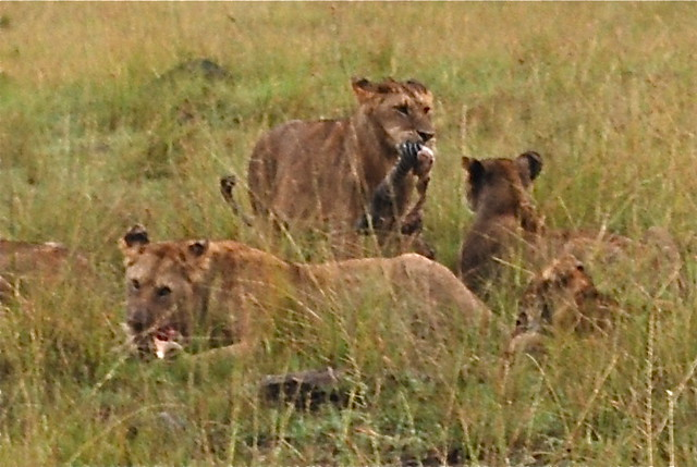 www.lions-dinslaken.de