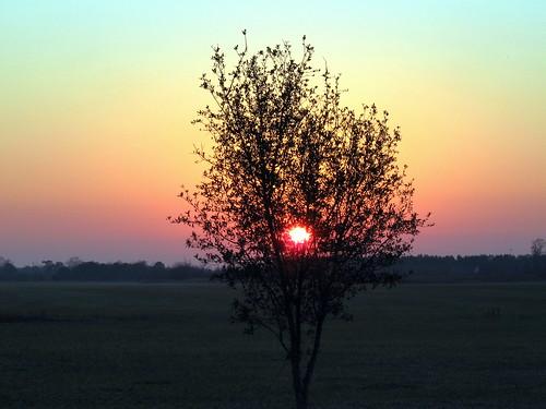 sunrise nc greenville