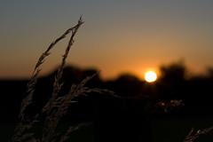 Coucher de soleil / IMG_3512