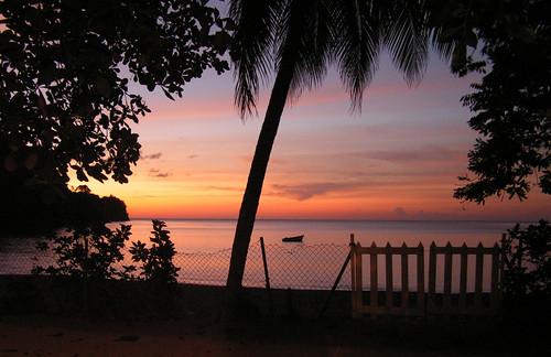 trees sunset beach island gates palm caribbean tobago charlotteville