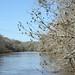 Apalachicola River tour