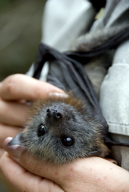 Very Cute Bat