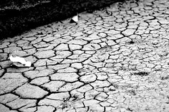 floor(0.0), asphalt(0.0), line(0.0), cobblestone(0.0), road surface(0.0), flooring(0.0), soil(1.0), drought(1.0), monochrome photography(1.0), monochrome(1.0), black-and-white(1.0),