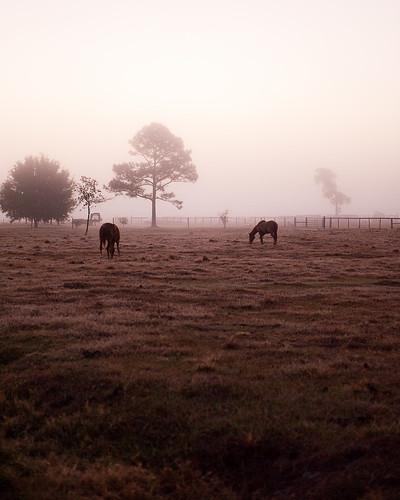 horse mist nature sunrise