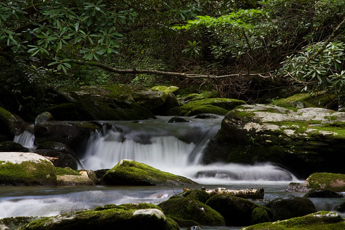 trees water rock nc moss stream northcarolina rhododendron cascade greatsmokymountainsnationalpark cataloocheevalley haywoodcounty palmercreek davidhopkinsphotography