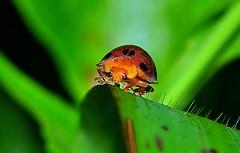 Ladybug checking me out