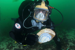 underwater diving, sports, outdoor recreation, marine biology, scuba diving, divemaster, diving equipment, water sport, underwater,