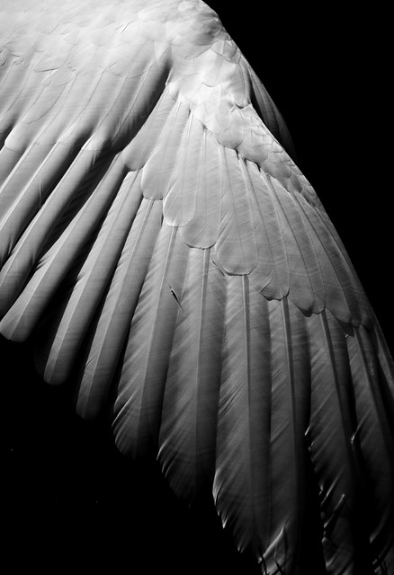 Wings of Desire | Flickr - Photo Sharing!