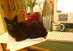 Cat on desk helping entrepreneur