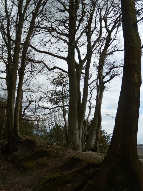 Trees, Standen Rocks