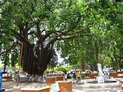 La Ceiba Central Park