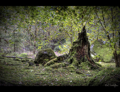 At Ängsö National Park 2 #HDR #photog