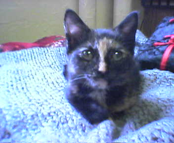 1-tiny tinoket, 3 month old kitten