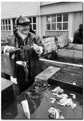 Fish Monger - Bergen Fish Market