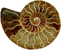 dishware(0.0), medicinal mushroom(0.0), produce(0.0), pattern(1.0), fossil(1.0),