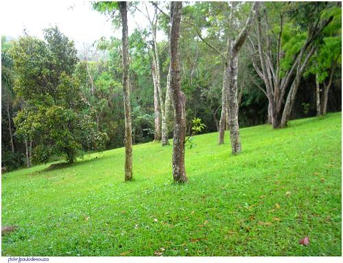 Foto de un parque con árboles y el cesped verde.