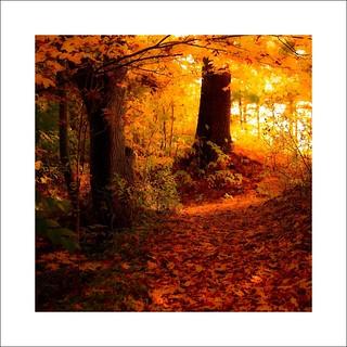 Carpette d'automne sur mon sentier près de ma rivière ...!!!