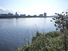 大漢溪底泥重金屬污染嚴重。(Formosa Wandering攝)