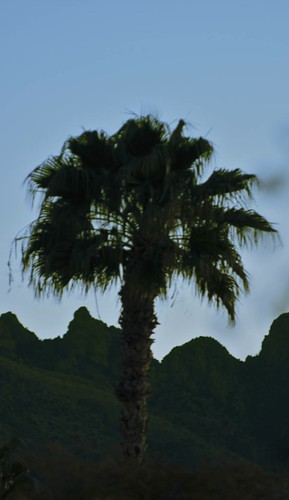 mountain sunrise tucson palm