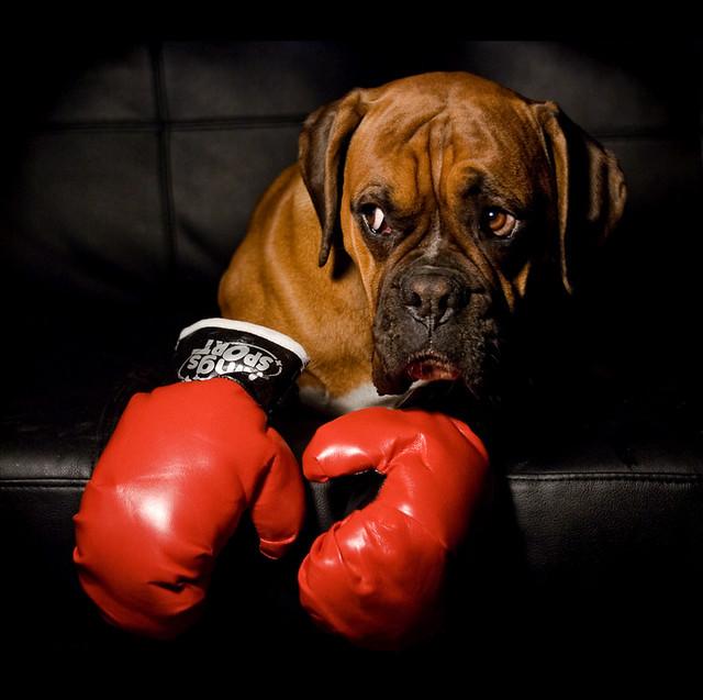 Rocky VI aka Aristotele