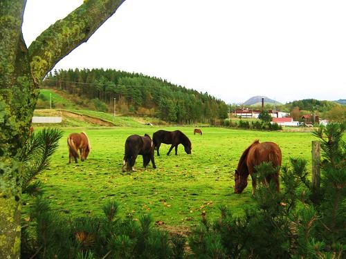 norway stavanger sandnes gandal islandhorses