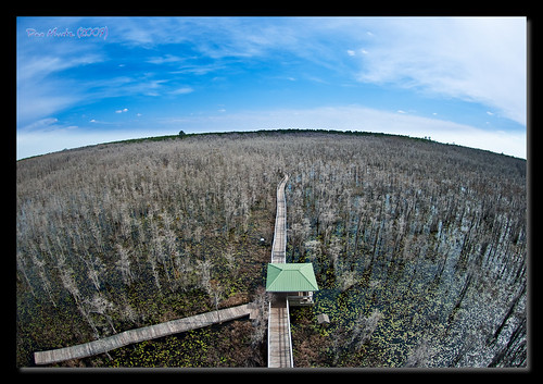 sky tower ga georgia bay valdosta angle wide grand fisheye swamp overlook wma lowndes d80 kinderou