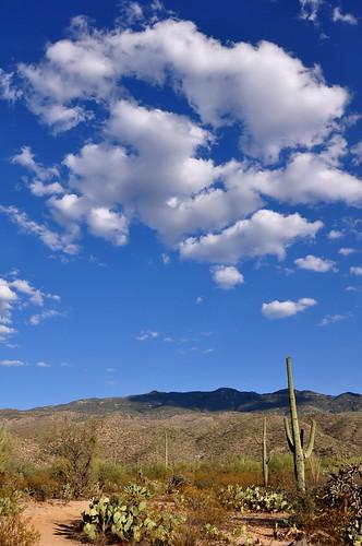 arizona cactus landscape desert tucson saguaro sonorandesert desertsky