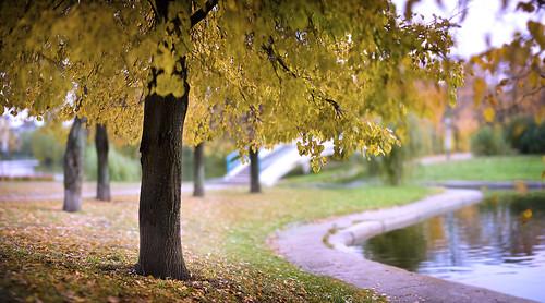 autumn nature landscape dof bokeh explore ef8512lii aleksandrmatveev czdistagon czdistagoncom