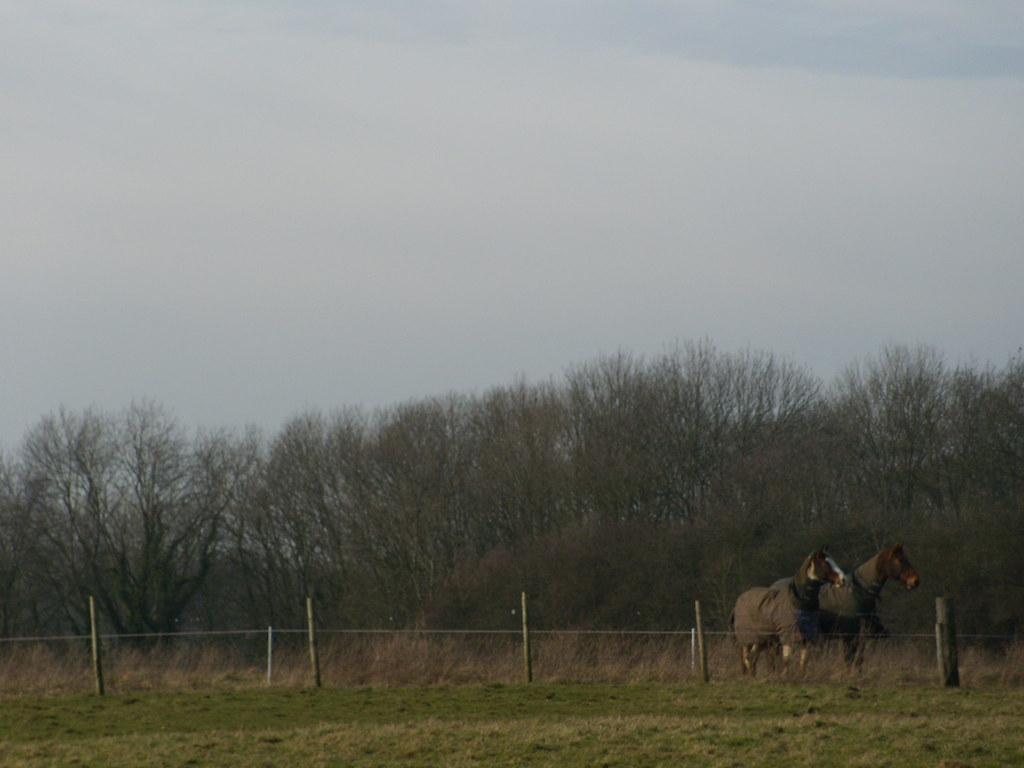 Horses Riddlesdown to Kingswood