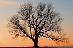 my tree in winter