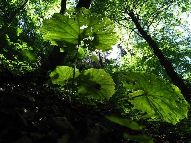 Photo for Trees garden of jane delawney blogspot