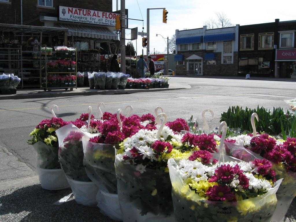 Flower Shop Toronto Shop Toronto Black Silk Flower