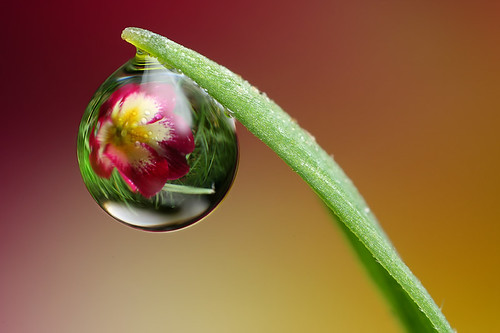 Dewdrop refraction #7