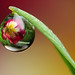 Dewdrop refraction #7 by Lord V